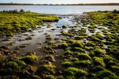Danish bog and lake landscape (2) Stock Image