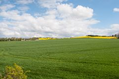 Danish field. In the countryside Royalty Free Stock Photos