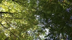 Danish forest in autumn stock footage