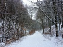 Danish forrest at wintertime royalty free stock image