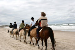 Danish horses on the beach. Danish horses on a a beach in the summer stock photography