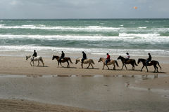 Danish horses on the beach Stock Photos