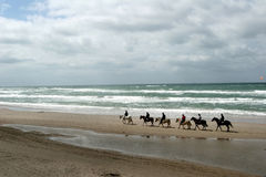 Danish horses on the beach. Danish horses on a beach in the summer Royalty Free Stock Photo