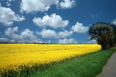 Danish landscape01 stock image