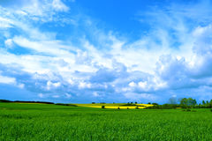 Danish spring landscape. Yellow fields in Denmark - spring, May month, north of Sjælland Stock Image