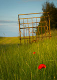 Danish summer. A couple of red poppies in the high grass in front of an old bale trailer - danish farming idyl Stock Images