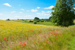 Free Danish Summer Landscape Stock Photos - 56954883