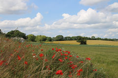 Danish summer landscape Royalty Free Stock Photography