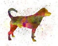 Danish swedish farmdog in watercolor Royalty Free Stock Photography