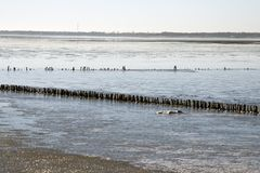Danish Wadden sea national park Royalty Free Stock Photos
