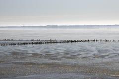 Danish Wadden sea national park Stock Photos