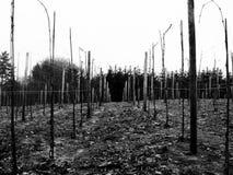 Danish Wines Royalty Free Stock Photos