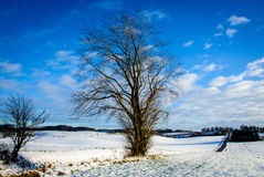 Danish winter landscape V Royalty Free Stock Photo