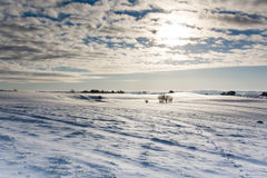 Danish winter. A panoramic view over a Danish field with small hills and groups of trees in the background. Snow covers the ground with tracks and animal paths Stock Images