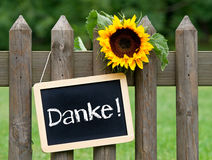 Danke sign on fence. German danke or thank you sign on wooden fence with sunflower and garden Royalty Free Stock Image