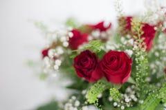 Danken de dichte rode rozen van het bloemenboeket op witte achtergrond omhoog u en het ontwerpruimte van de liefdekaart voor teks Stock Fotografie