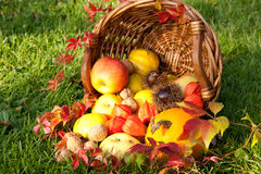 Danksagung - bunter Herbstkorb mit Früchten Stockbild