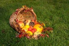Danksagung - bunter Herbstkorb mit Früchten Stockfoto