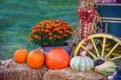 Dankzegging Vakantie Autumn Harvest Display Pumpkin Patch Halloween Stock Foto's