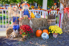 Dankzegging Vakantie Autumn Harvest Display Pumpkin Patch Halloween Royalty-vrije Stock Afbeeldingen