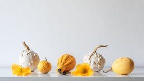 Dankzeggingsdecoratie De herfst geïnspireerde ruimtedecoratie Selectie van diverse pompoenen op witte plank tegen witte muur royalty-vrije stock afbeeldingen