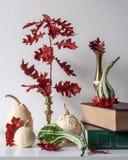 Dankzeggingsdecoratie Minimale de herfst geïnspireerde ruimtedecoratie Selectie van diverse pompoenen op witte plank royalty-vrije stock afbeelding
