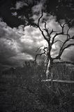 Dannahs-Baum Lizenzfreies Stockfoto