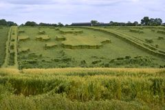Danni provocati dal maltempo agricoli del raccolto Fotografia Stock