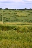 Danni provocati dal maltempo agricoli del raccolto Fotografie Stock Libere da Diritti