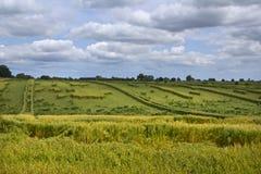 Danni provocati dal maltempo agricoli del raccolto Immagine Stock Libera da Diritti