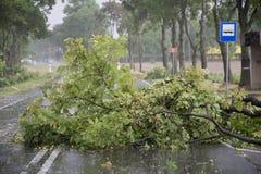 Danni provocati dal maltempo del vento Fotografia Stock Libera da Diritti
