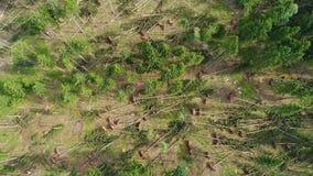 Danni provocati dal maltempo, foresta video d archivio