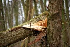 Danni provocati dal maltempo in una foresta Fotografia Stock