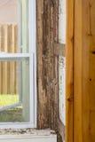 Danno della termite Fotografia Stock Libera da Diritti