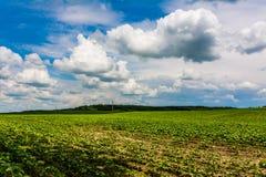 Danno di agricoltura Fotografia Stock Libera da Diritti