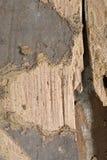 Danno di legno della cavità della plancia del granaio dagli insetti Immagini Stock