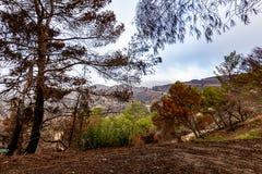 Danno di Los Angeles Hillside da fuoco e dalla siccità fotografia stock libera da diritti