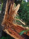 Danno di uragano Immagini Stock Libere da Diritti