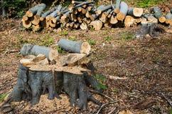 Dano à natureza Desflorestamento, destruição de florestas decíduos europa fotos de stock royalty free