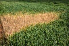 Dano ambiental da colheita Imagens de Stock