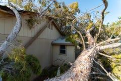 Dano da árvore ao telhado após Major Monsoon imagens de stock royalty free