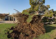 Dano da árvore ao telhado após Major Monsoon imagem de stock royalty free
