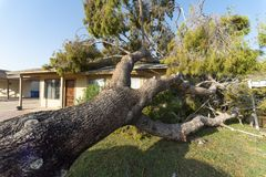 Dano da árvore ao telhado após Major Monsoon fotos de stock royalty free