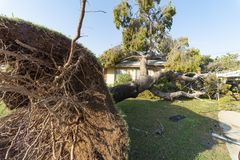 Dano da árvore ao telhado após Major Monsoon foto de stock royalty free