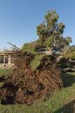 Dano da árvore ao telhado após Major Monsoon foto de stock