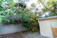 Dano da árvore ao telhado após Major Monsoon fotografia de stock royalty free