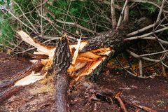 Dano da inundação e do vento do furacão fotografia de stock