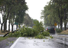 Dano da tempestade do vento fotos de stock royalty free