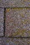Dano do molde/musgo em telhas do telhado Foto de Stock Royalty Free