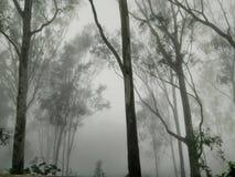 Dans à la forêt en hiver photographie stock libre de droits